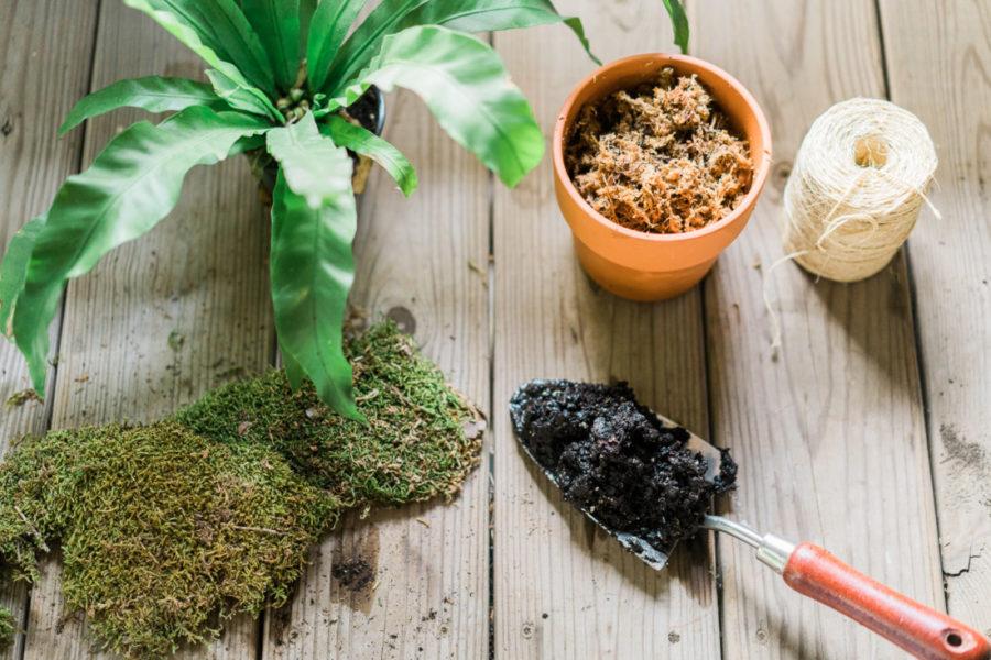 How to make a kokedama- Japanese moss ball garden