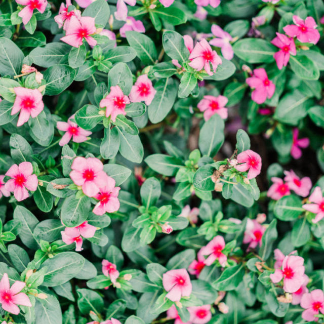 film photography of some flowers