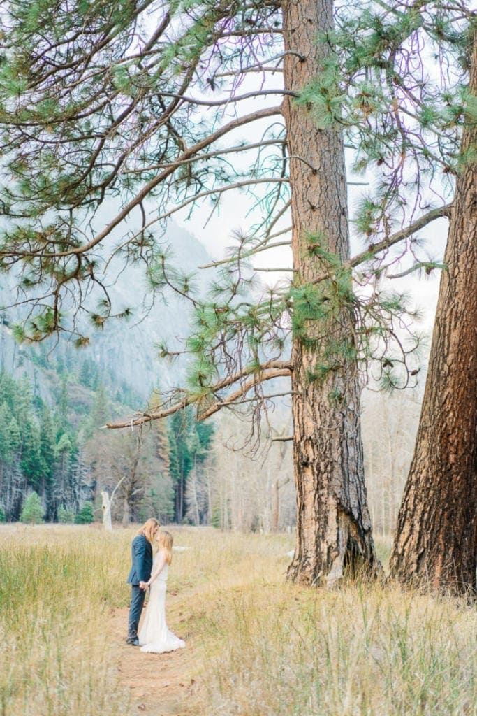 elopement under a big tree in California