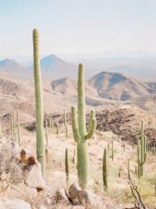film photography of Saguaro National park in Arizona