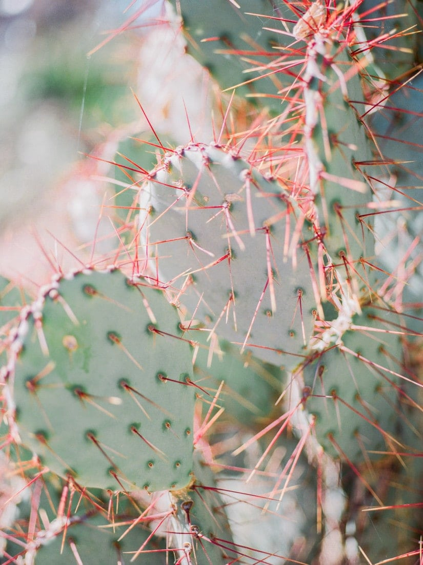 Fuji 400H film photography of some cacti in the desert