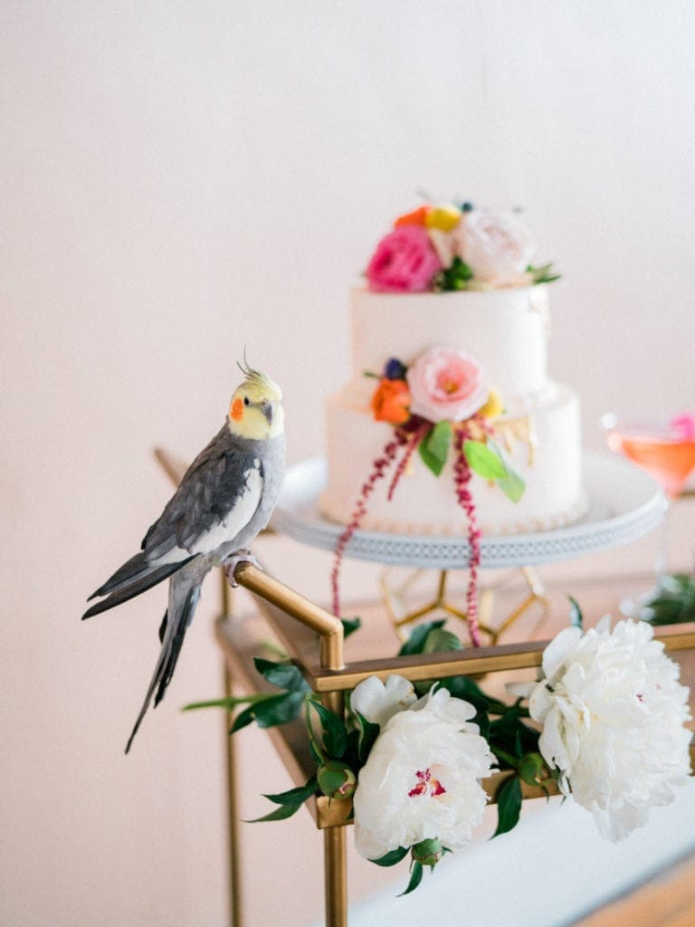 parrot sitting next to a colorful floral wedding cake