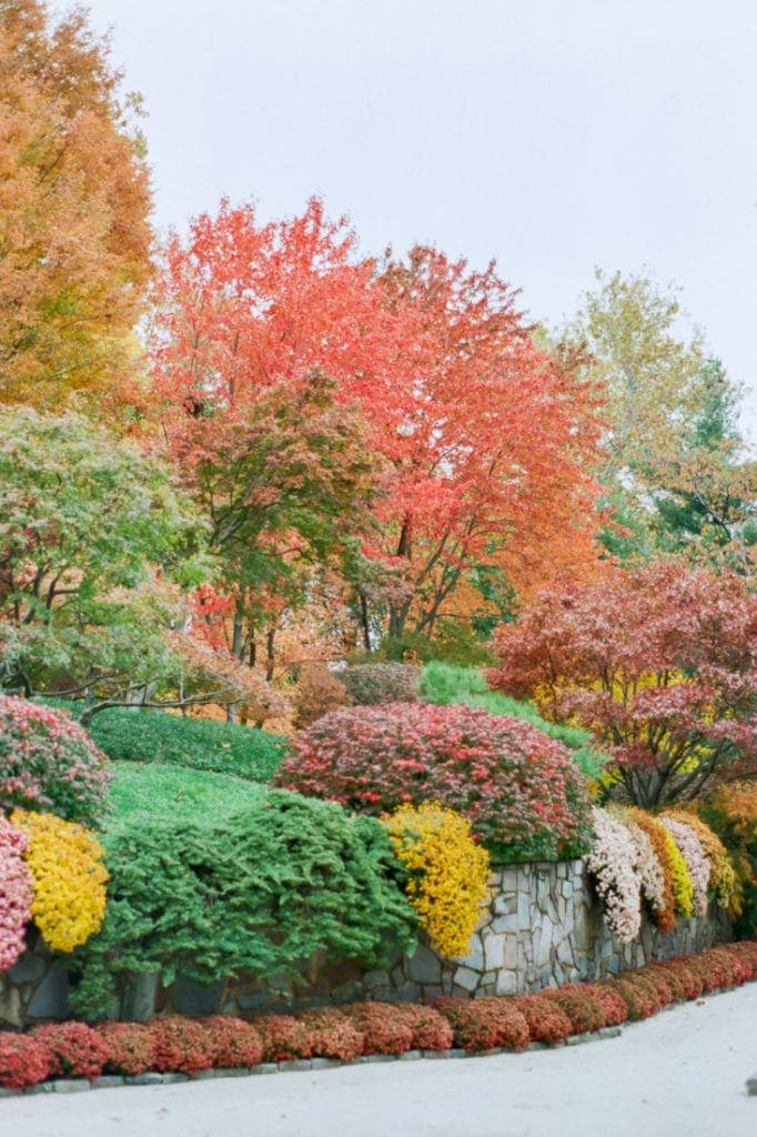 Missouri Botanical Gardens in the fall | St. Louis wedding photographer