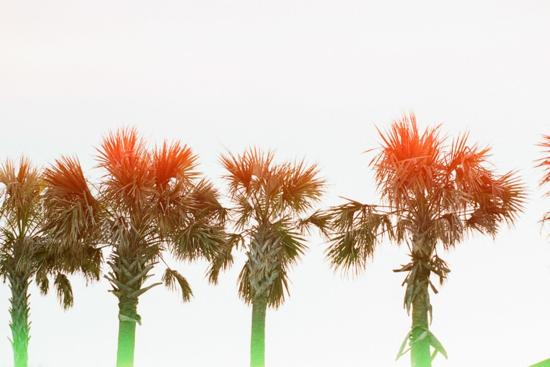 Psychedelic Blues film with palm trees at Tybee Island