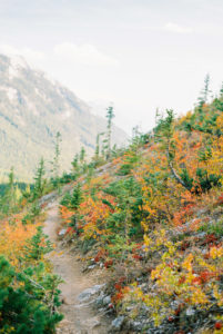 fall colors in Glacier National Park