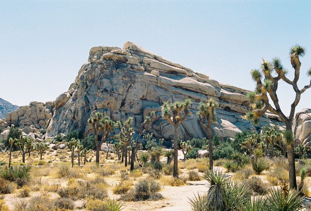 Joshua Tree National Park during the day
