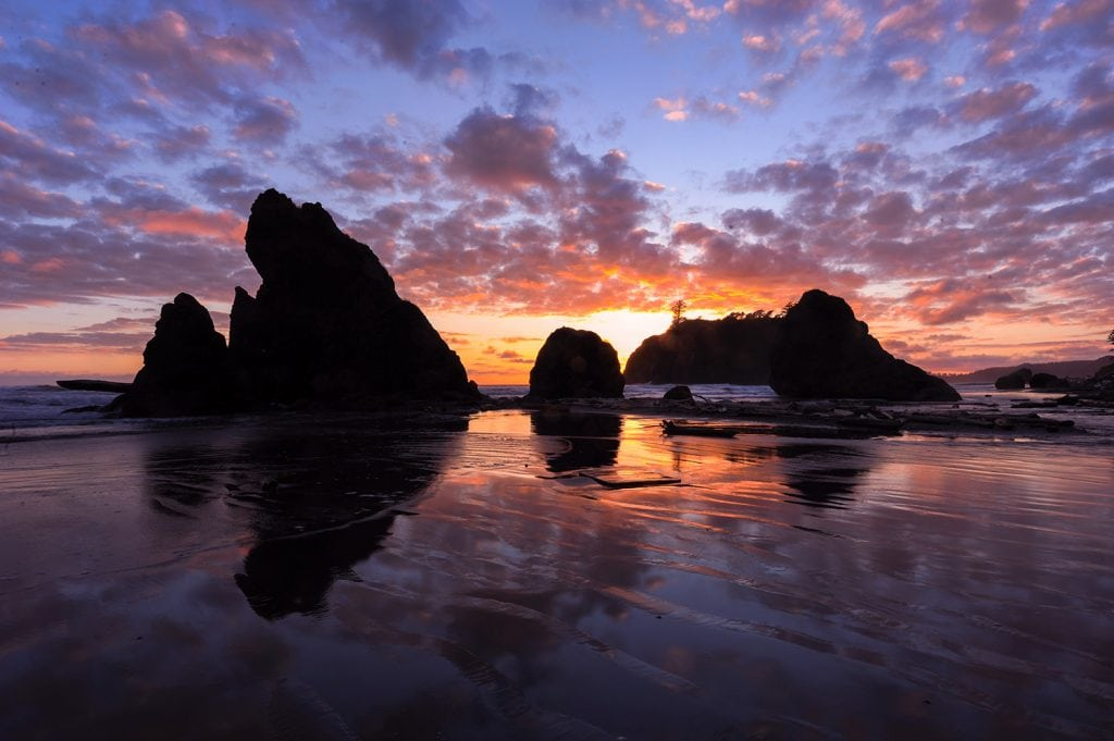 beach at sunset in Olympic National Park