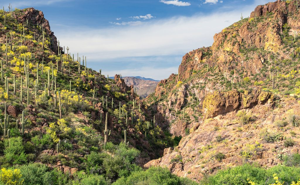 eloping in Saguaro National Park in Arizona