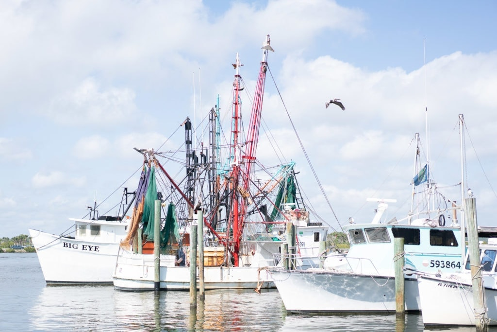 Print for sale: sail boats in a harbor in Florida