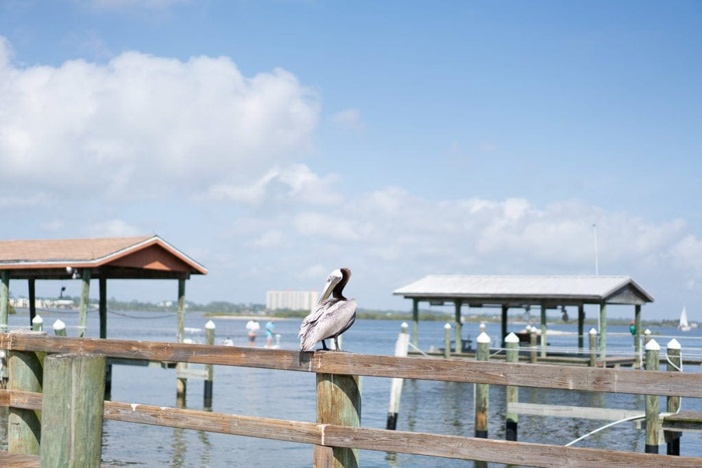 Print for sale: pelican on a dock in Florida