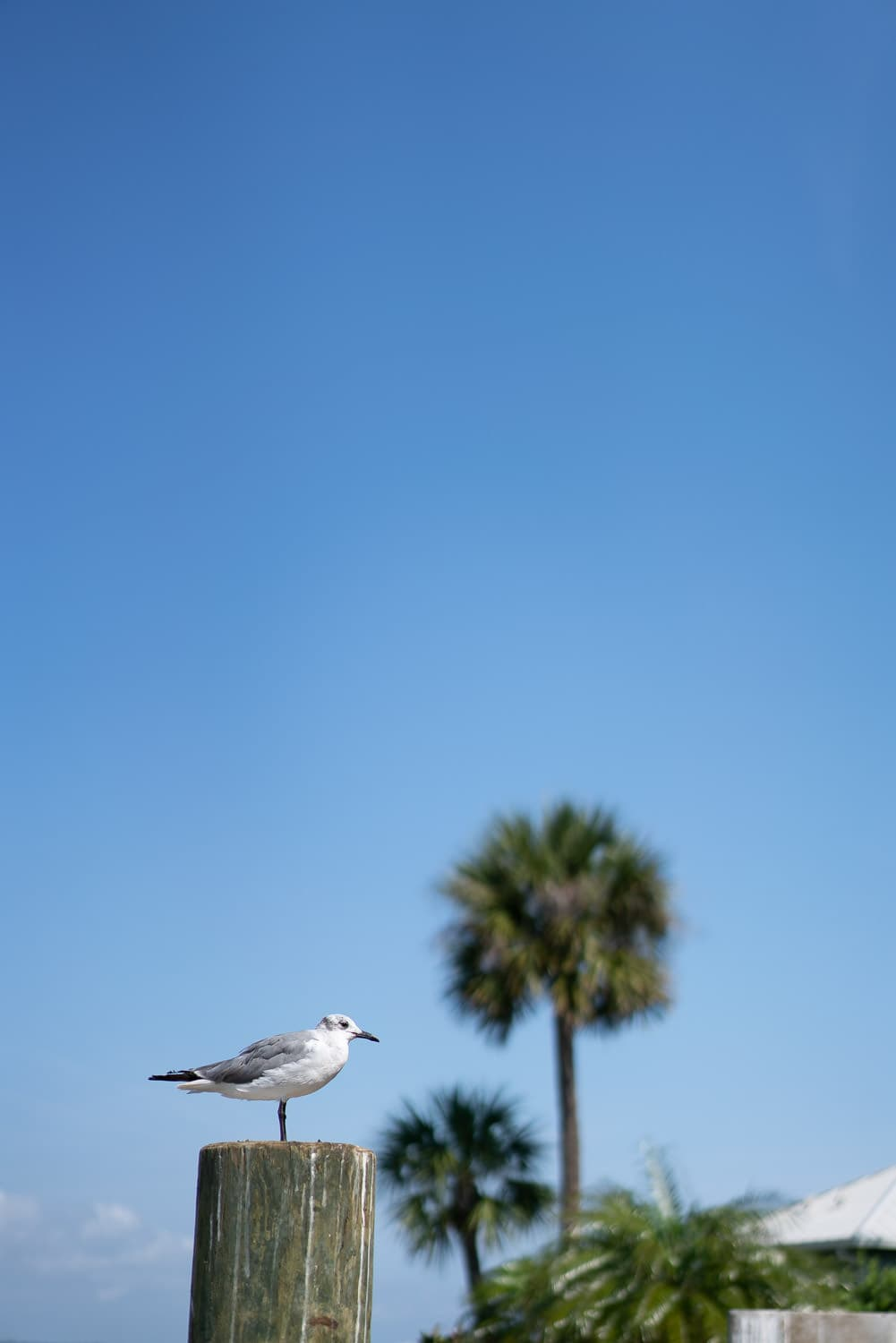 Print for sale: seagull on a dock in Florida
