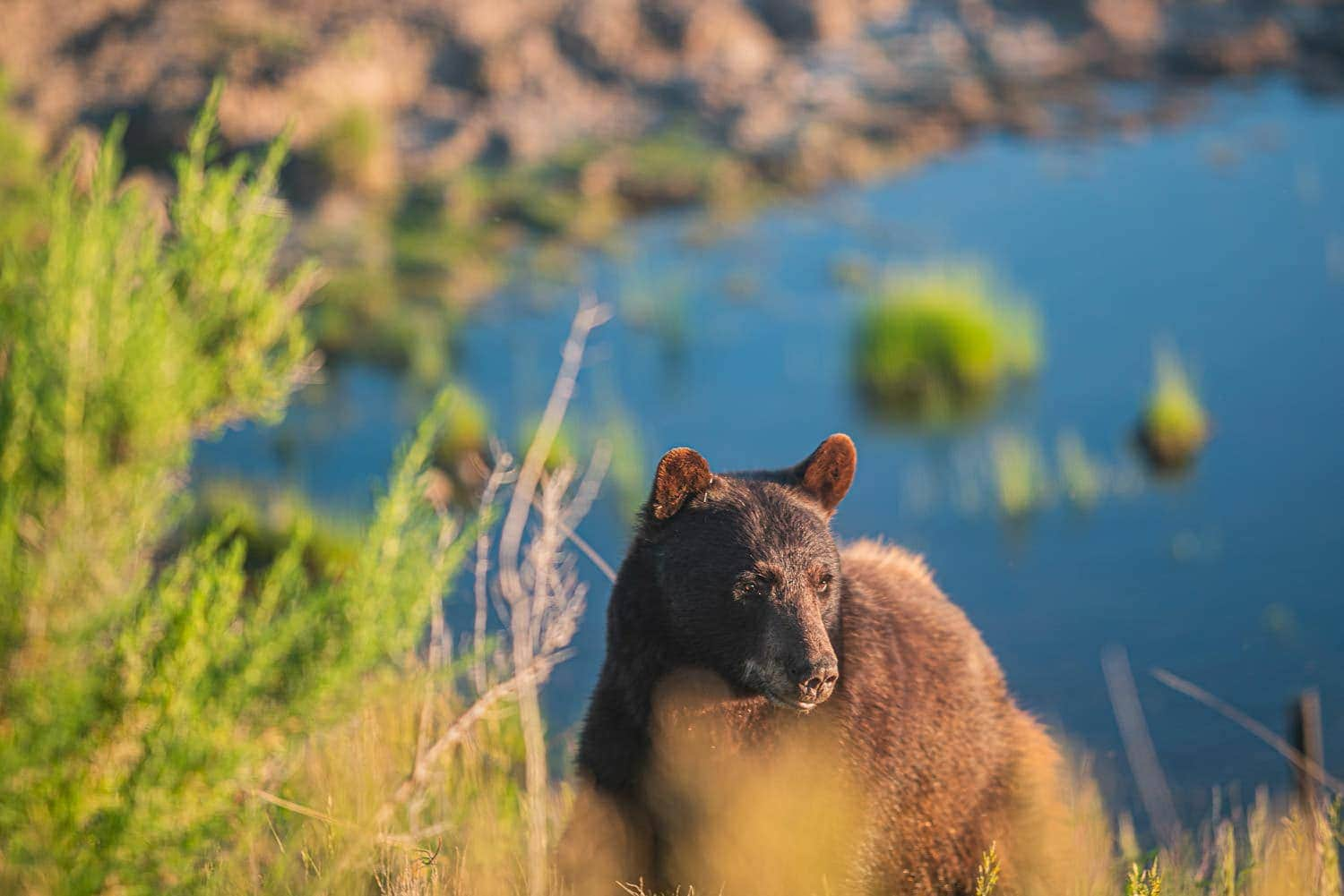 Leave no trace to protect wildlife like this black bear.
