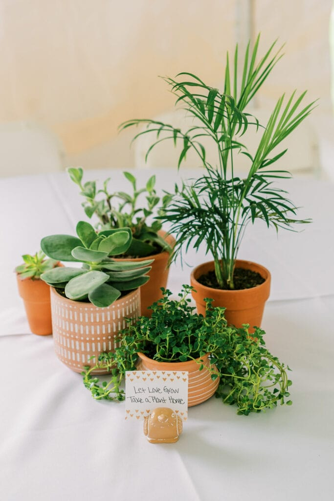 Potted plants for decor at an outdoor tent wedding.